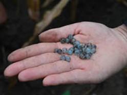 从土壤挖出的控释水球